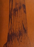 The Redwood, 1938-1939